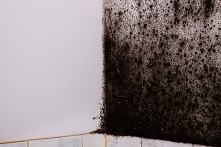 black mold: Black mold in the corner of kitchen.
