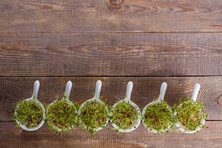 water cress: Growing cress in small bowls view from the top. Wooden background with copy space.