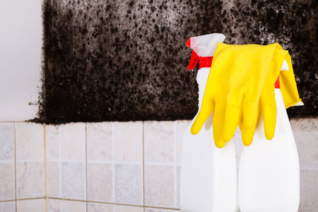 Preparation for the removal of mold and yellow gloves against the mold on wall. Stock Photo