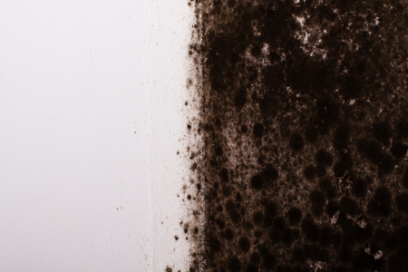 Black mold in the corner of kitchen.