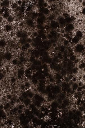 black mold: Black mold background.