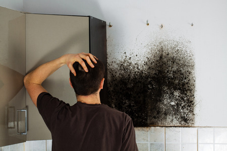 Man shocked to mold a kitchen cabinet. 版權商用圖片 - 51674192