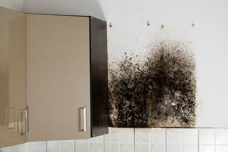 Mold behind kitchen cabinets.