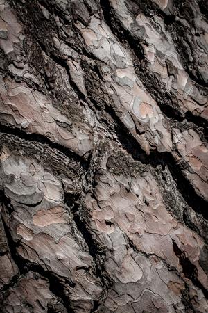 tree detail: Tree bark background, old vintage style. Stock Photo