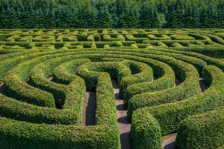 ornamental plant: Green bushes circular labyrinth, hedge maze. Top view.