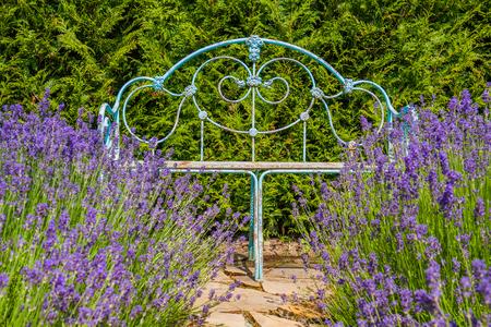 amongst: Decorative bench in a park amongst lavender.
