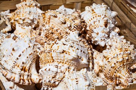 bazaar: Decorative crab shells in basket on bazaar. Stock Photo