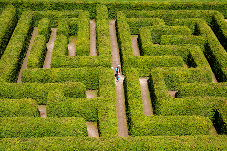 hedge: People walking on green bushes labyrinth, hedge maze.