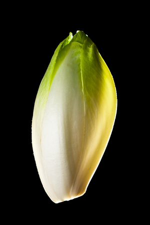 endive: Green chicory (Belgian endive) vegetable close up isolated on black. Stock Photo