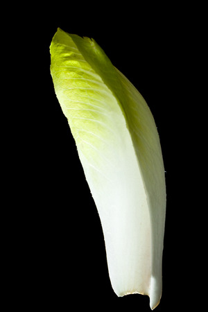 endive: Leaf of green chicory (Belgian endive) vegetable close up isolated on black.