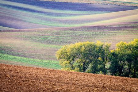 moravia: Moravian Fields. The landscape around Kyjov called the Moravian Tuscany, Czechia, Europe.