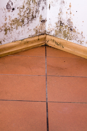 clean lungs: Mold and moisture buildup on corner wall of a house.