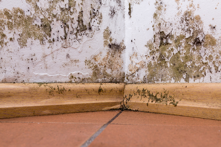 Mold and moisture buildup on corner wall of a house.