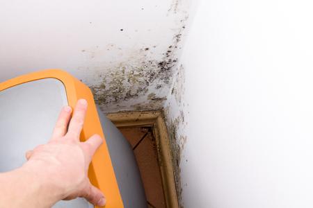Mold and fungus behind rubbish bin on wall.