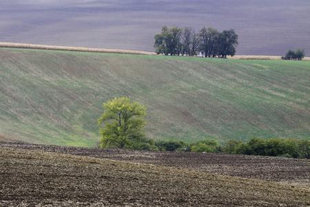 Moravian Fields in Czechia.