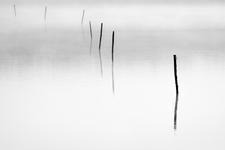 Background of lake plate with sticks and fog above. Stock Photo