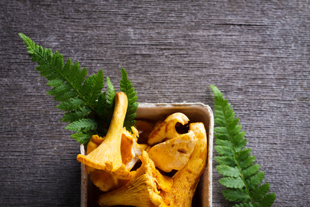 Background of Chanterelle (yellow mushroom) and fern leaf with copy space.