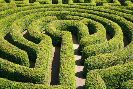 Green bushes maze view from above for garden. Stock Photo