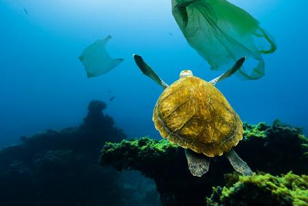 Unterwasserschildkröte, die zwischen Plastiktüten schwimmt. Konzept der Verschmutzung der Wasserumwelt.