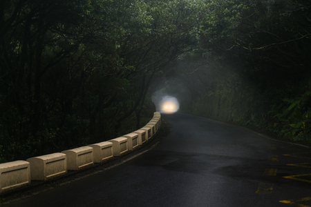 Car light on misty road in Anaga forest on Tenerife.