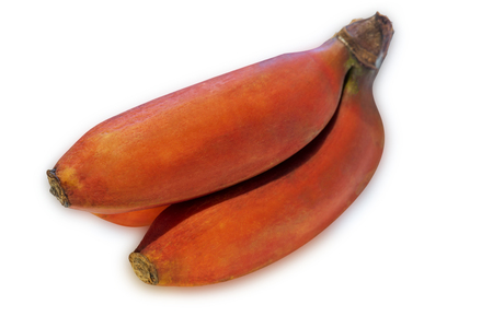 Small red bananas isolated on white background.