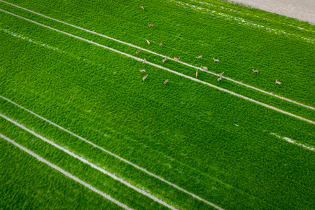Tractor fresh trace on the field