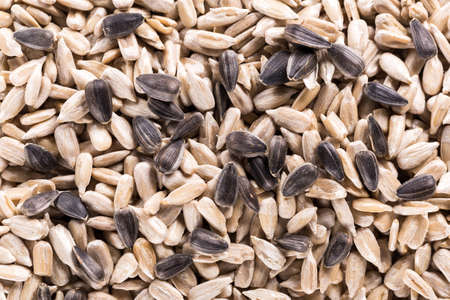 Background of big raw sunflower seeds, situated arbitrarily.