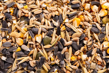 Background of raw assorted seed and nuts for feeding wild birds. 免版税图像