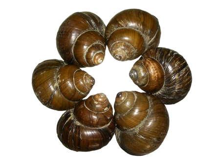 Lake Conch Shells - Teamwork Stock fotó - 998026