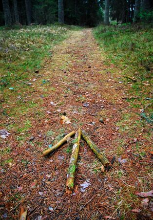 arrow on the forest path Stock Photo - 15952013
