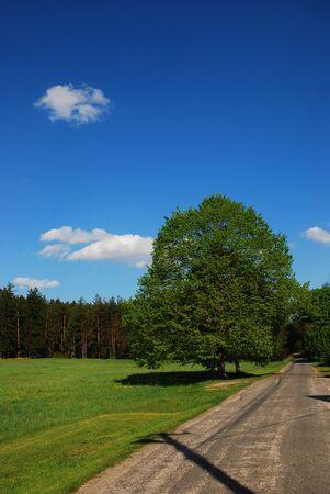Spring road around the tree Stock Photo - 15951964
