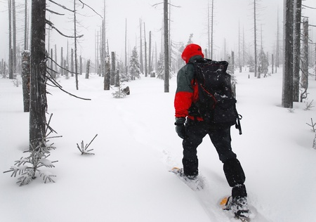 snowshoes: man goes through the woods on snowshoes
