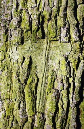 old cross carved into the bark of a tree photo