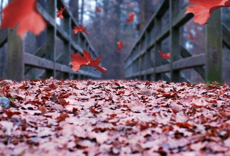 red falling leaves in autumn forest path