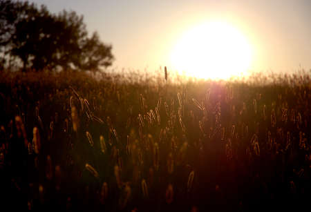 setting sun: summer evening in the middle of meadows, with the setting sun Stock Photo