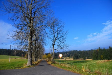 road through an avenue of trees under a deep blue sky Stock Photo - 16960873