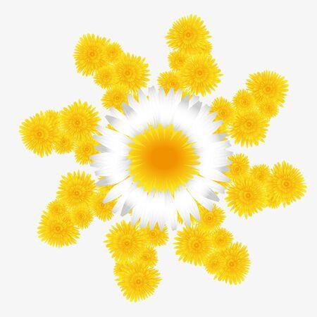 marguerite: dandelion and marguerite floral pattern on a white background Illustration