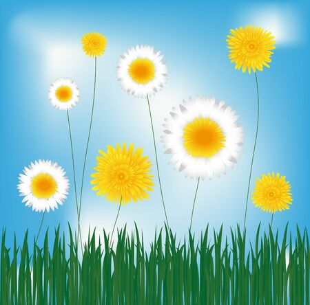 Dandelions and daisies in the green grass, spring theme Stock Vector - 17105739
