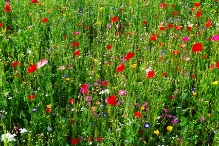 full of blooming flowers on spring meadow Stock Photo - 18411164
