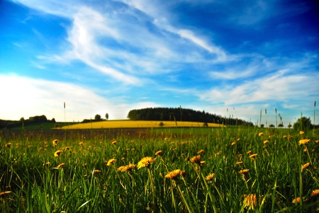 meadow full of flowers and grass with blue sky and dandelions Stock Photo - 18411158