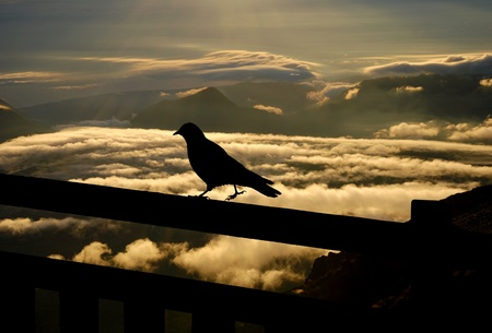 struts: blackbird struts along the edge of the railing above the clouds