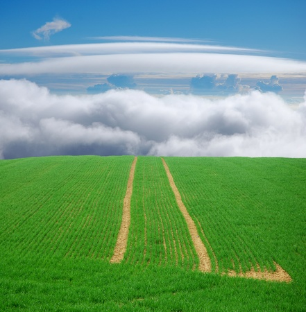 green field trip to heaven, tracks leading to the blue sky Stock Photo - 19508082