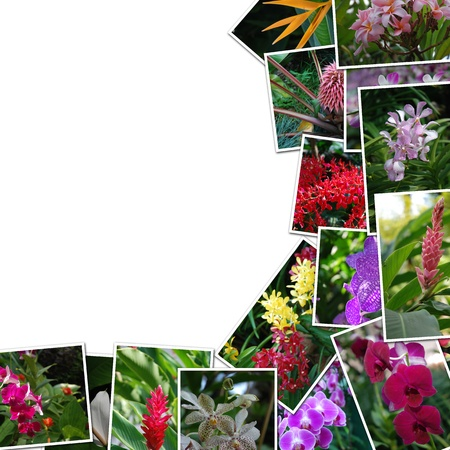 Frame photos of flowers on a white background, orchids in boxes photo