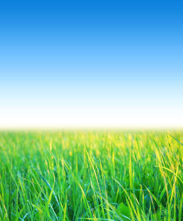 clear blue sky with green grass, summer day Stock Photo - 21650268