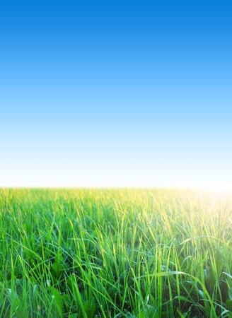 clear blue sky with green grass, summer day Stock Photo - 21650270
