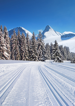 cross-country ski trail through the forest with mountains and blue sky on the horizon photo