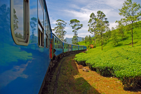 blue train passing through tea plantations in the landscape of tea