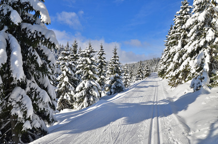 ski track: fresh track for cross-country skiing through the forest with lots of snow