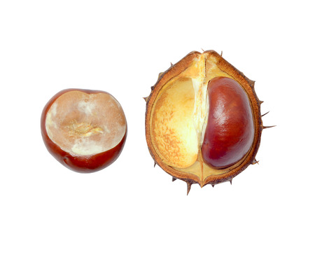 fresh autumn chestnut in shell on a white background