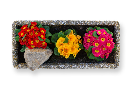 Top view of a pot full of spring flowers on a white background in a stone pot